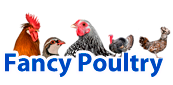 Fancy Poultry