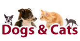 Dogs and cats products