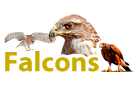 falcon products