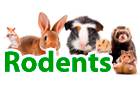 rodents products